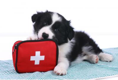 What Do You Need in Your First Aid Kit? (& Why)