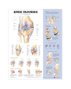 Anatomical Charts