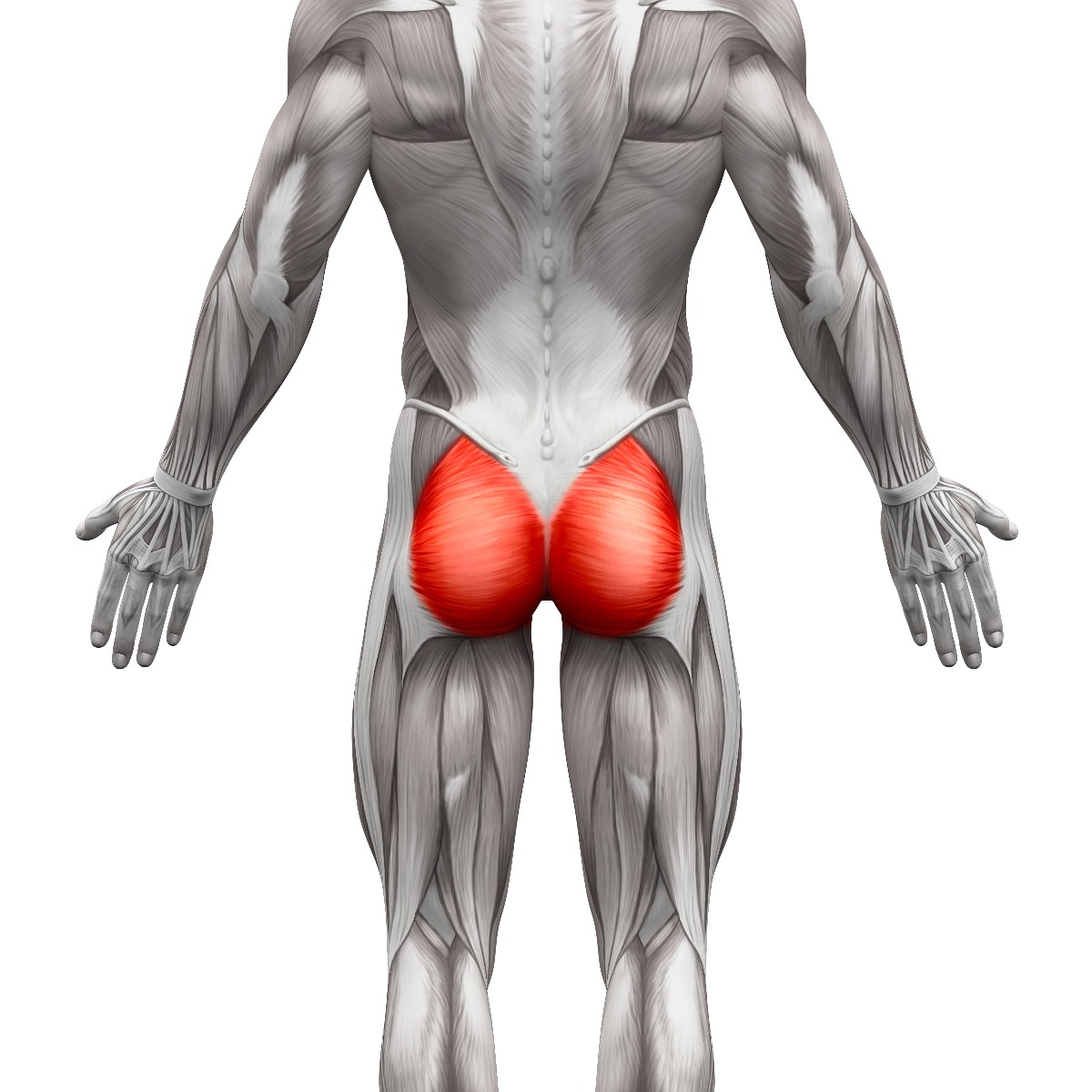 Rear anatomy view of glute muscles, highlighted in red